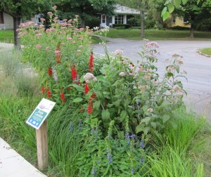 Rain Garden in Lawn Extension
