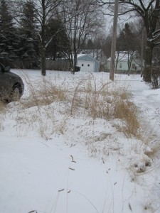 Short Prairie Grasses in Winter