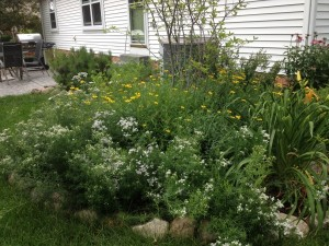 Native Perennial Bed