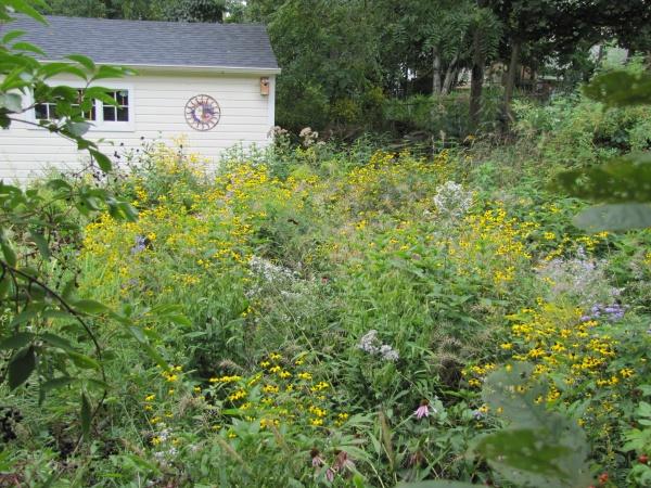 Sustainable Backyard Garden : backyard garden before sustainable landscaping