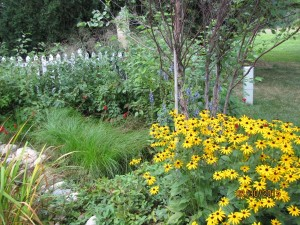 Rain Garden with Native Michigan Natural Plants, Trees and Flowers