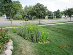 Rain Garden Next to Sidewalk with Natural Michigan Native Plants