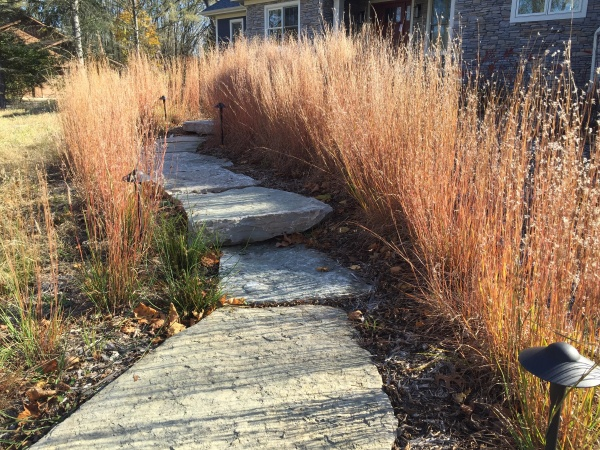 little bluestem along walk creating sustainable landscapes
