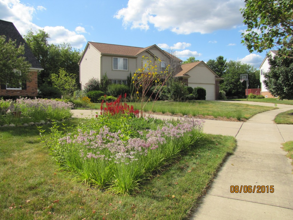 Rain Garden in the Front Yard of a Residential property