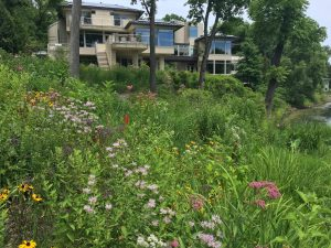 Natural Plants For Landscaping Design in Wayne County MI