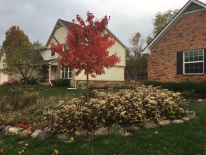Native perennial landscape design