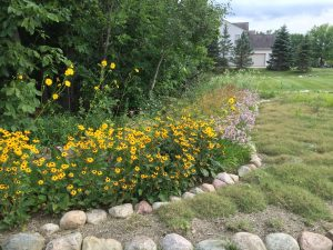 Native perennial landscape edge design