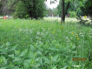 Field of natural plants used in our landscaping designs