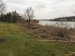 Invasive flora species removal in Wayne County MI